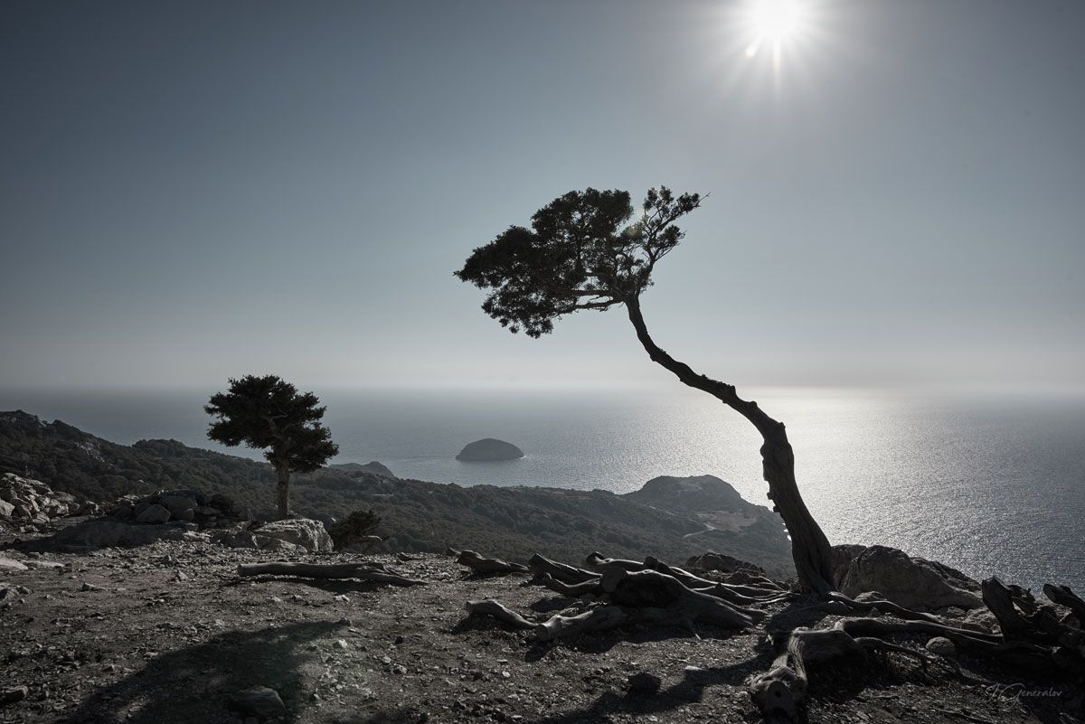 Single tree (Rhodes)